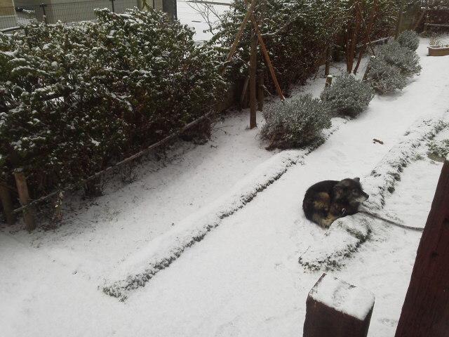 雪の元旦(AKI)